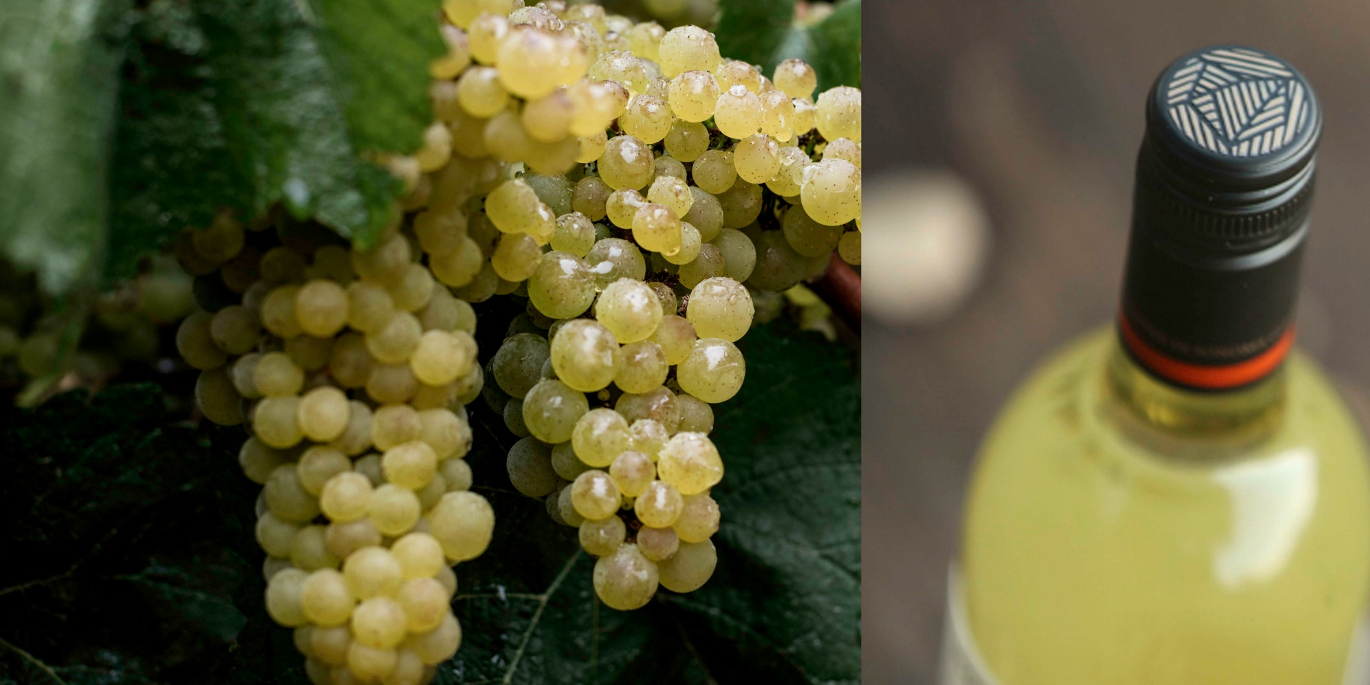 white wines kenwood