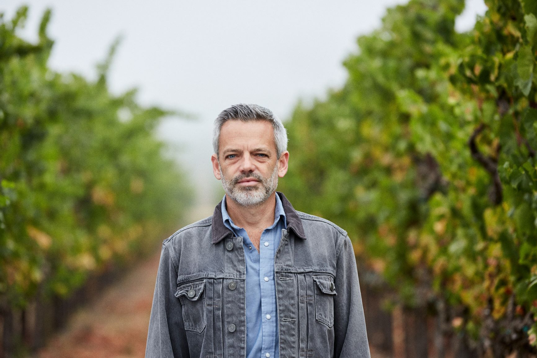 Kenwood Winemaker Asses Harvest