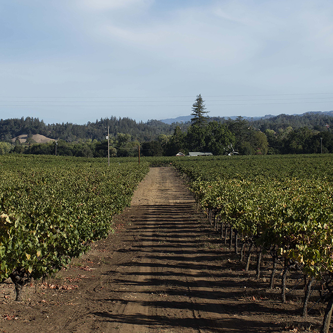 Dry Creek Valley AVA