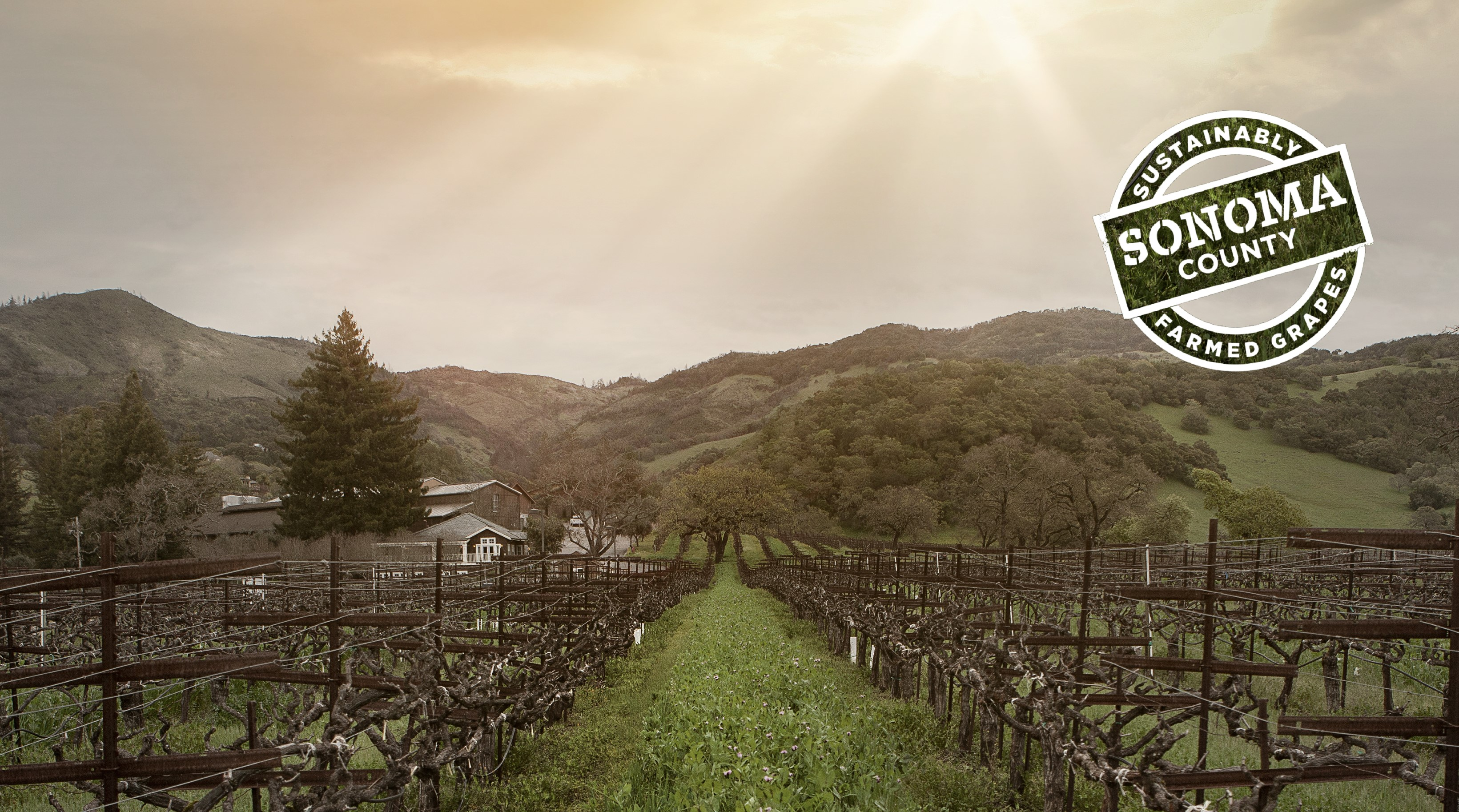 Our estate vineyards are proud to be Sonoma County Sustainable Certified